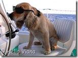 Dingue no comando - Foto © Hélio Viana