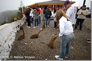 Alimentando os quatis - Foto © Hélio Viana