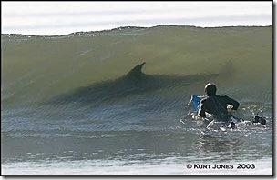 Golfinho © Kurt Jones