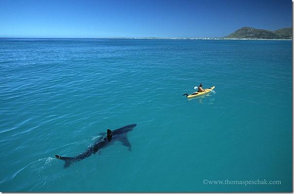 White Shark Kayak © Thomas P. Peschak