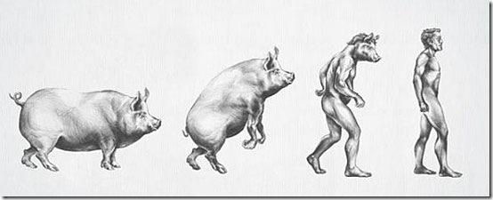 Evolucao-Porco
