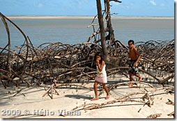 O mangue não tem vida perto do rio