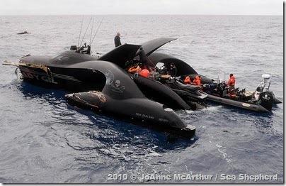 Tripulação do Ady Gil sendo resgatada