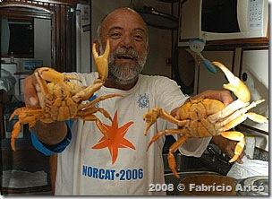 Os caranguejos de Trindade têm um sabor especial