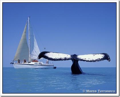 Jubarte com veleiro em Abrolhos