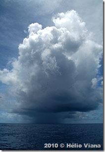 Um pirajá no meio do Atlântico