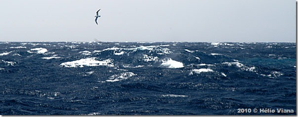 No mar aberto. Vento de força 7?